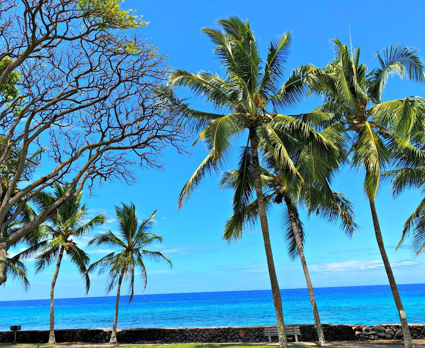 KIANA TOM VIEW KONA HAWAII